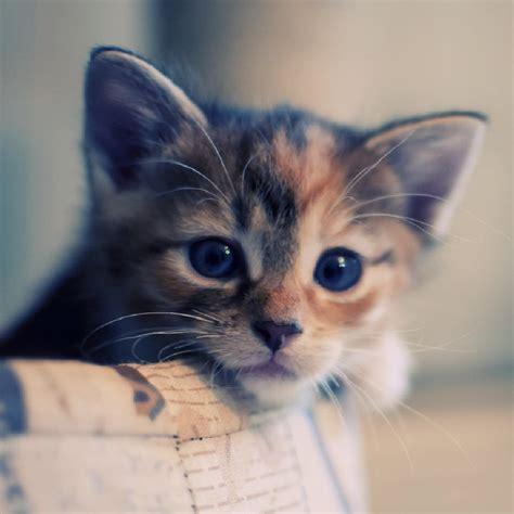非常暖心的猫咪小清新唯美qq头像 好看的可爱猫咪图片大全 唯美头像 Q趣家园