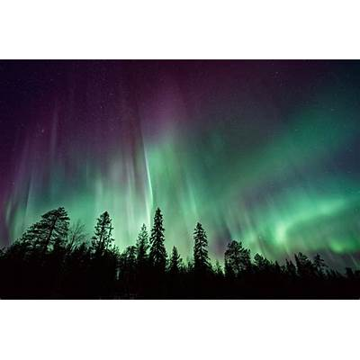 Wallpaper Northern Lights Forest Aurora Borealis 4K 8K