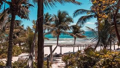 Summer Beach Palms Laptop Background Tablet Tropics
