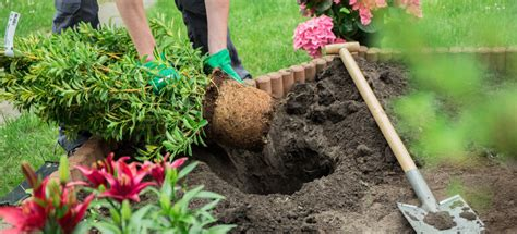 Gardening For Beginners by Simple As Abc 8 Gardening Tips For Beginners