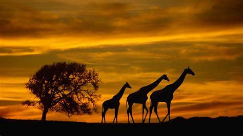Animal Wallpaper Desktop Background - wildlife desktop backgrounds 183