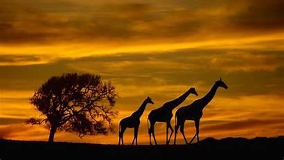 Wildlife Wallpapers Animals Desktop Backgrounds Africa Sunset