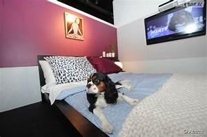 Hotel Pour Chien : vienne des chambres d 39 h tel de luxe pour les chiens ~ Nature-et-papiers.com Idées de Décoration