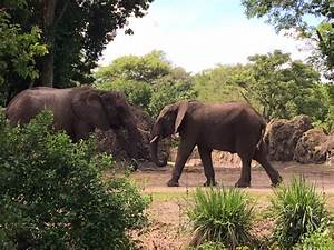 Caring for Giants - A Disney's Animal Kingdom Tour - WDW ...