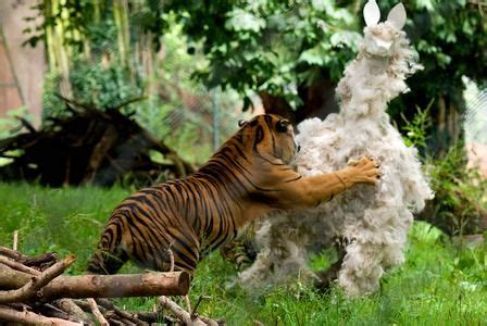 125 Best Animal Enrichment Images On Pinterest Zoo