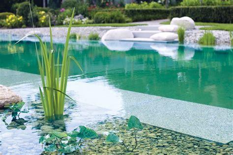 naturpool oder schwimmteich schwimmteiche zinsser gartengestaltung schwimmteiche und swimmingpools