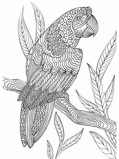 Coloring Pages Birds Adult Zentangle Parrot Printable
