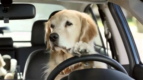 subaru dog commercial funny commercials youtube