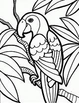 Coloring Birds Pages Parrot Bird Name Kind Knowing sketch template