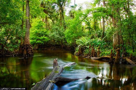 loxahatchee river backwaters  jupiter florida hdr