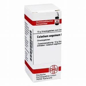 Caladium Knollen Kaufen : caladium seguinum c 6 globuli 10 gramm n1 online bestellen ~ Lizthompson.info Haus und Dekorationen