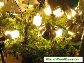 Grow Lamps For Indoor Plants by Cannabis Grow Light Upgrade Guide Yields Amp Potency