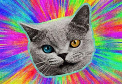 golf wang cat cat wang on