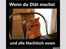 Katzen, Lustig and Grumpy Cat on Pinterest