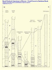 Sedimentology Of Purbeck Evaporites