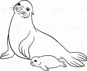 Coloring Pages Mother Seal With Her Little Cute Baby stock ...
