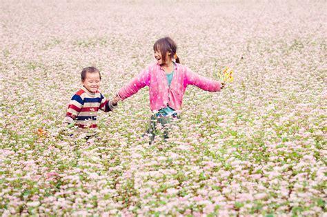 Tam giác mạch, loại hoa đẹp, vị thuốc quý