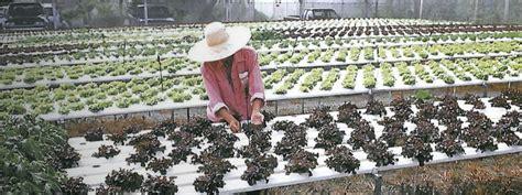 การปลูกพืชด้วยวิธีไฮโดรพอนิกส์