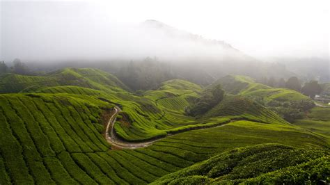 Cameron Highlands Wallpaper, Nature  Meadows Cameron
