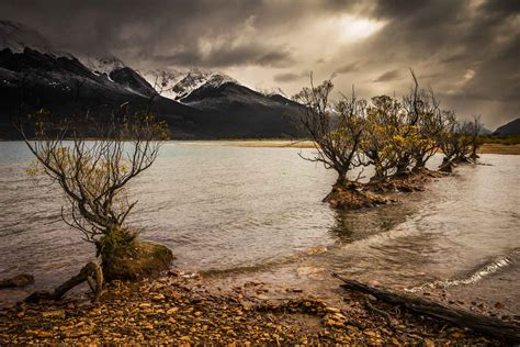 willow gold glenorchy nz steve rutherford landscape