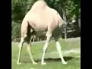 Heisser Kopf Ohne Fieber : kamel ohne kopf youtube ~ Frokenaadalensverden.com Haus und Dekorationen
