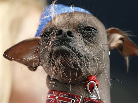 world s ugliest dog the evolution of mugly s frightful