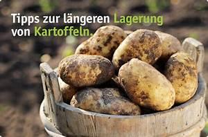 Kartoffeln Und Zwiebeln Lagern : kartoffeln l nger lagern besserhaushalten ~ Markanthonyermac.com Haus und Dekorationen