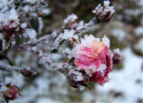 Winter Im Garten by Garten Allerlei Frauerlei Gesundheit Garten Und Genuss