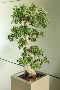 Große Zimmerpflanzen Wenig Licht : zimmerpflanzen f r besseres raumklima mein sch ner garten ~ Markanthonyermac.com Haus und Dekorationen
