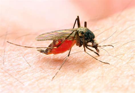 Tips Wanita Hamil 2 Bulan Gejala Dan Bahaya Malaria Pada Ibu Hamil