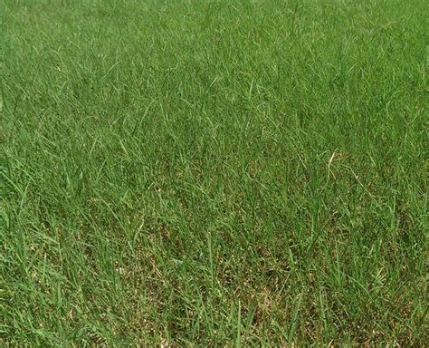 Greengrass Blog, Lawn Care And Landscaping, Tulsa