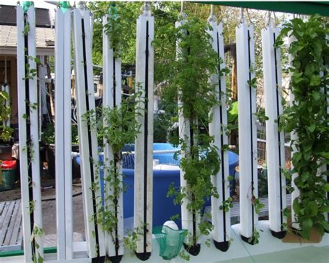 Vertical Garden Pipe by Chico Aquaponic Idea For Vertical Gardening