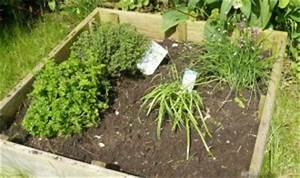Herbes Aromatiques En Pot : les herbes aromatiques tout un programme au potager ~ Premium-room.com Idées de Décoration