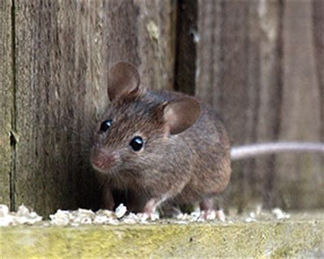 show me pictures of mice wildlife and your car car talk