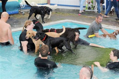 Heckington Community Swimming Pool Starts Allowing Dogs