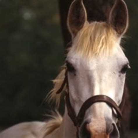 horse horses face hypoallergenic tail herda rubbing pain stain sun center withers herd causes injury removal step technique equusmagazine protect