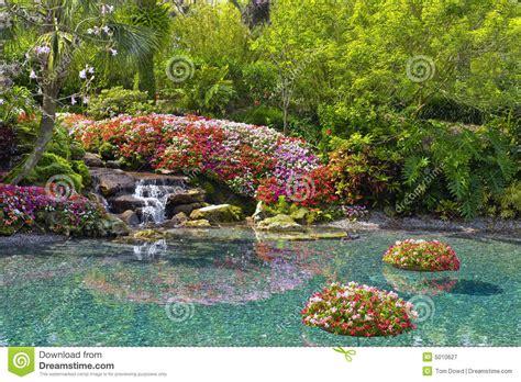 bloemen in afwasmiddel en water fotograferen bloemen rond vijver royalty vrije stock fotografie beeld