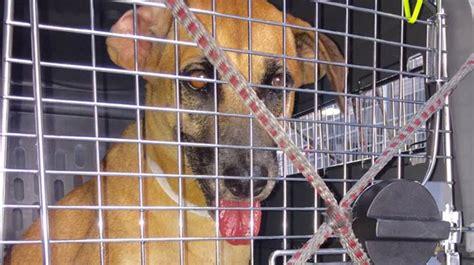 animals forced  homelessness  hurricane irma headed