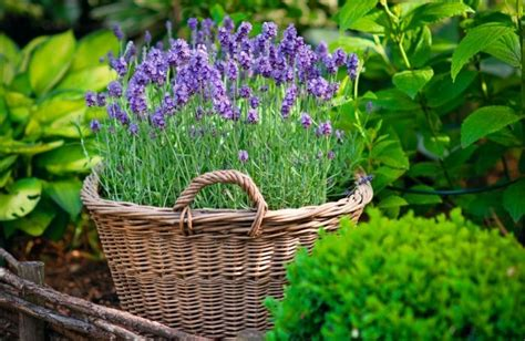 Gartengestaltung Im Innenhof Trendomatcom