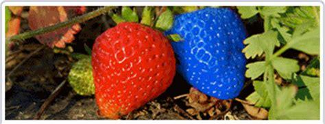 Alimenti Geneticamente Modificati Terra Organismi Geneticamente Modificati