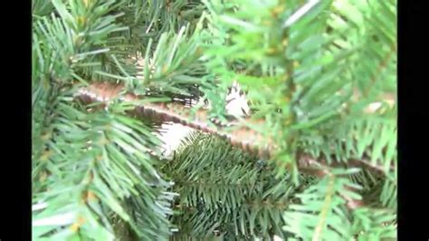 review of balsam hill trees balsam hill artificial tree unboxing setup and review