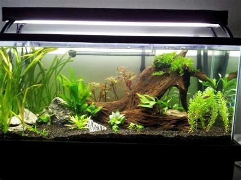 gallon breeder tank   aquascaping aquariums