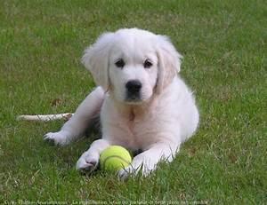 Taille Moyenne Bébé : chien taille moyenne poil long ~ Nature-et-papiers.com Idées de Décoration