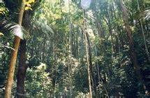 Location Voiture Guadeloupe Comparateur : la for t tropicale est devenue parc national de la guadeloupe ~ Medecine-chirurgie-esthetiques.com Avis de Voitures