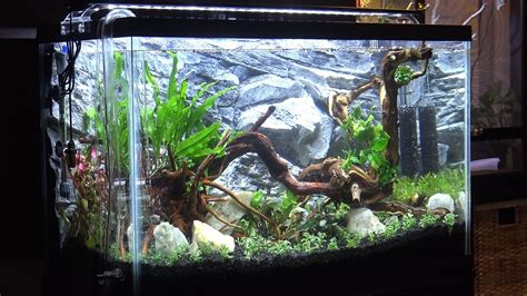 setup aquascape 29 gallon freshwater planted aquarium aquascaping setup