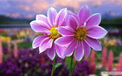 Flowers Wallpapers Screen Computer Laptops Colorful Wide