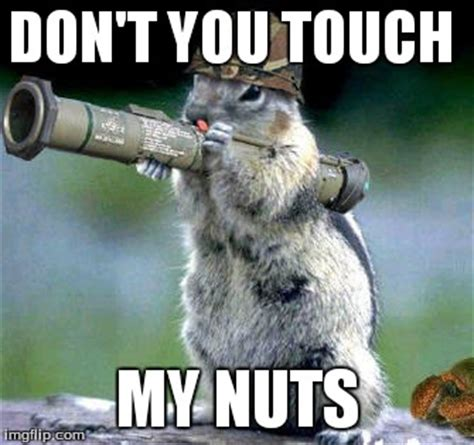 Squirrel Nuts Meme - squirrel nuts meme www pixshark com images galleries with a bite
