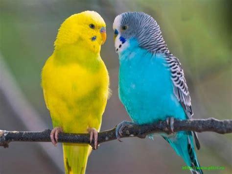 pet parrot 10 intelligent and friendly pet parrot species