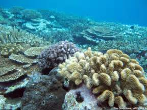 What Do Coral Reefs Look Like