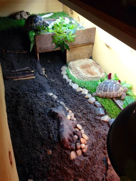 Best Heat Ls For Turtles by Best 25 Tortoise Table Ideas On